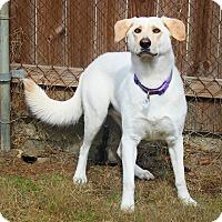 Adopt A Pet :: Rosie - Shreveport, LA