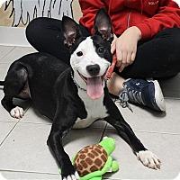Adopt A Pet :: Angel - Elyria, OH