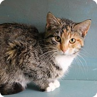 Adopt A Pet :: Azariah - West Des Moines, IA