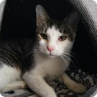 Adopt A Pet :: Yoshi - New Milford, CT