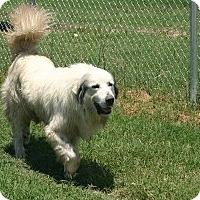 Adopt A Pet :: Brewster - Quinlan, TX