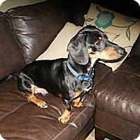 Adopt A Pet :: Leopold (Leo) - Hilliard, OH