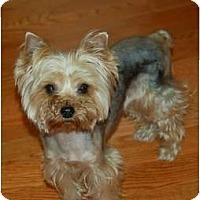 Adopt A Pet :: Ellie Mea - Charlotte, NC