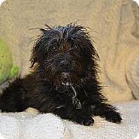 Adopt A Pet :: Tinkerbell - Tumwater, WA