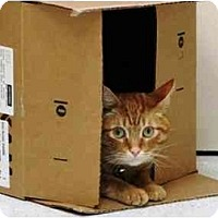 Adopt A Pet :: Ace - Irvine, CA