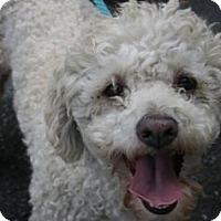 Adopt A Pet :: Pokie - Canoga Park, CA