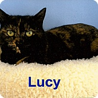 Adopt A Pet :: Lucy - Medway, MA
