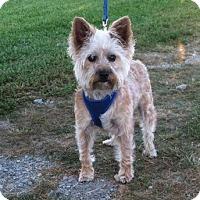 Adopt A Pet :: Ollie - Medora, IN