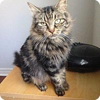 Adopt A Pet :: Farrah - Hamilton, ON
