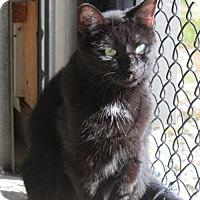 Adopt A Pet :: Shelley - Hamilton, ON