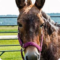 Adopt A Pet :: Sparkles - Malvern, IA