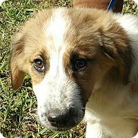 Adopt A Pet :: Zizzie - Staunton, VA
