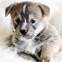 Adopt A Pet :: Gareth - La Costa, CA