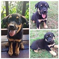 Adopt A Pet :: Orion - Longview, TX