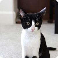Adopt A Pet :: Tech: Meme - Las Vegas, NV