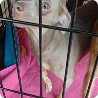 Adopt A Pet :: Wynndee - Visalia, CA