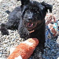 Adopt A Pet :: Frankie - Berea, OH