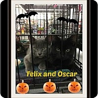 Adopt A Pet :: Felix and Oscar - Highland, MI