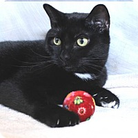 Adopt A Pet :: Phoenix 32148796 - Westampton, NJ
