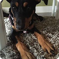 Dachshund/Hound (Unknown Type) Mix Dog for adoption in Rockville, Maryland - Baby Jenny