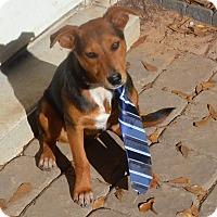 Adopt A Pet :: Roy - pending - Manchester, NH