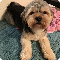 Adopt A Pet :: Douglas - Las Vegas, NV
