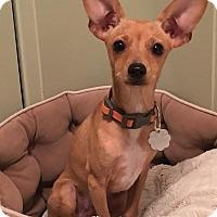 Adopt A Pet :: Luigi - Franklinville, NJ
