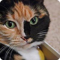 Adopt A Pet :: Moe - Stafford, VA
