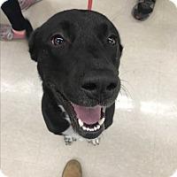 Adopt A Pet :: Dylan - Sparta, NJ