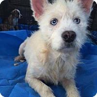 Adopt A Pet :: Willow D3334 - Shakopee, MN