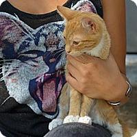 Adopt A Pet :: Chile - Brooklyn, NY