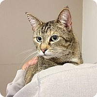 Adopt A Pet :: Gabbie - Troy, OH