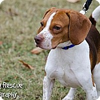 Adopt A Pet :: Petey - Arlington, TN