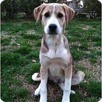 Adopt A Pet :: Sunday - Richmond, VA