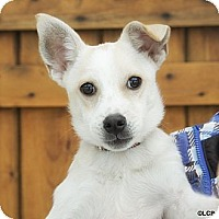Adopt A Pet :: Darling Daiquiri - Brooklyn, NY