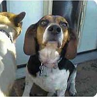 Adopt A Pet :: Ajax - Phoenix, AZ