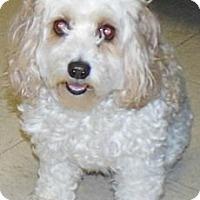 Adopt A Pet :: Daisy - Washington Court House, OH