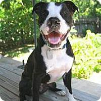 Adopt A Pet :: Rodger - Austin, TX