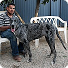 Adopt A Pet :: Kesha