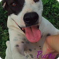 Adopt A Pet :: Purdy - Somerville, TX