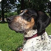 Adopt A Pet :: Miss Daisey - Montreal, QC