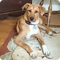 Adopt A Pet :: Ann - Richmond, VA