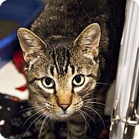 Adopt A Pet :: Gonzo - Lincoln, NE