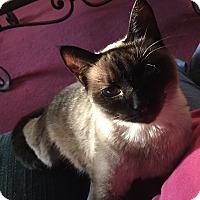 Adopt A Pet :: Cleopatra - Hampton, VA
