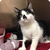 Adopt A Pet :: H-6 - Triadelphia, WV