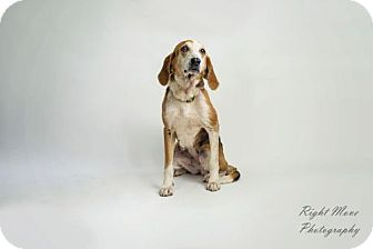 Hound (Unknown Type) Mix Dog for adoption in North Myrtle Beach, South Carolina - Bubbles