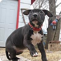 Adopt A Pet :: Banshee - West Allis, WI