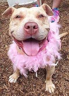 Terrier (Unknown Type, Medium) Mix Dog for adoption in Rockaway, New Jersey - Isa Wilson