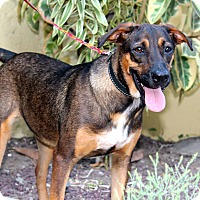 Adopt A Pet :: Chaco - from Costa Rica - Los Angeles, CA