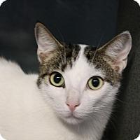 Adopt A Pet :: Maverick - Sarasota, FL